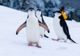 Smiling Penguins © unsplash.com/Derek Oyen