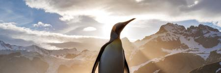 Penguin in the Sunset © unsplash.com/Ian Parker