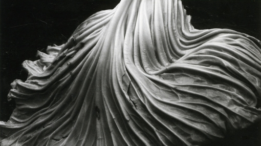 Edward Weston, Cabbage Leaf, 1931 © Center for Creative Photography, Arizona/Foto: Hubert Auer